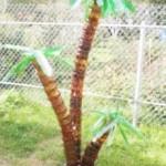plastikovaya-palma