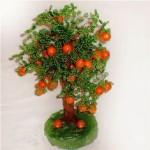 апельсиновое дерево своими руками