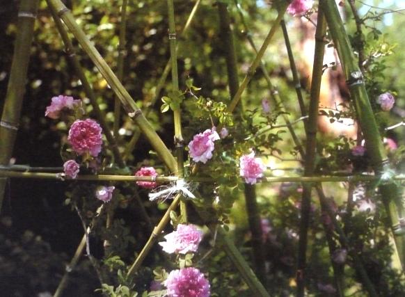 шпалера для вьющихся растений