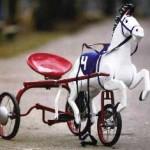 велосипед конь
