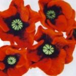 цветок мак валяние из шерсти